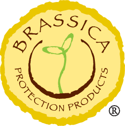 关于Brassica