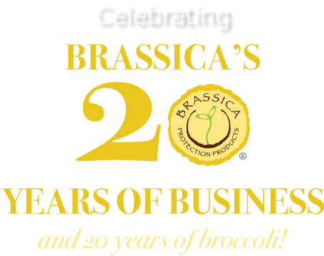 celebrating Brassica's 20t years of business and broccoli