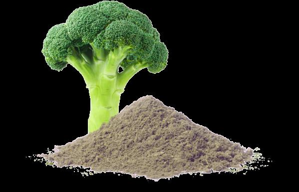 broccoli and broccoli powder